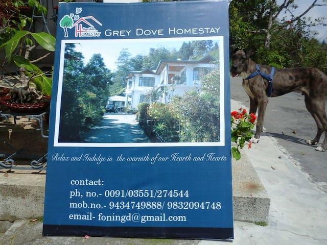 GreyDoveHomestay - Kalimpong  - Bed & Breakfast