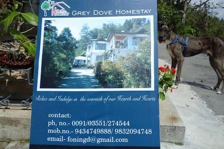 GreyDoveHomestay