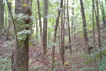 Wander our beautiful forested land with buckeyes, walnuts, pawpaws and hickory and maple and oak.