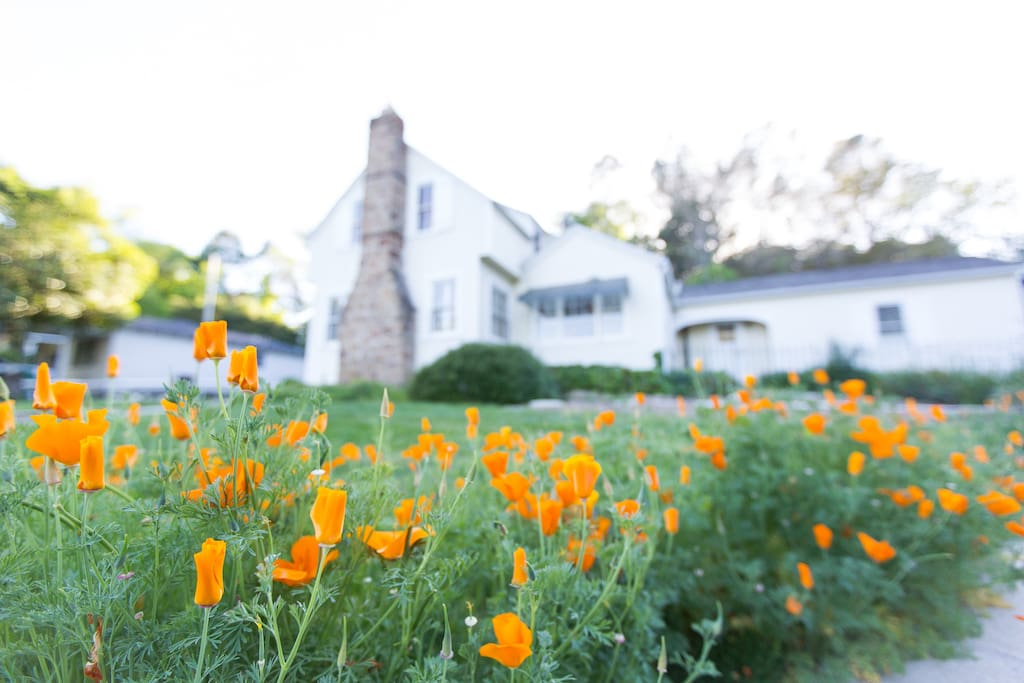 Surrounded by California Poppy's!!