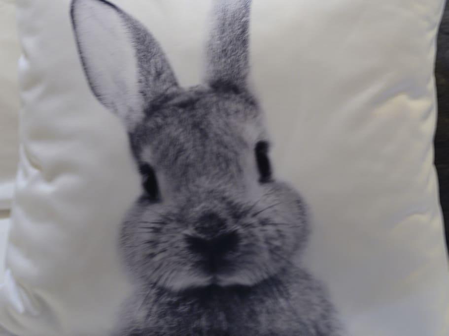 The Burrow Rabbit