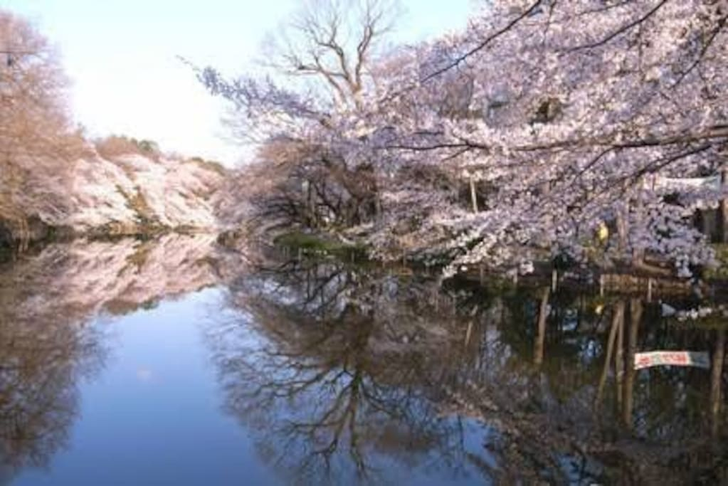 Two minutes walk to one of the largest parks in Tokyo, Inokashira Park.