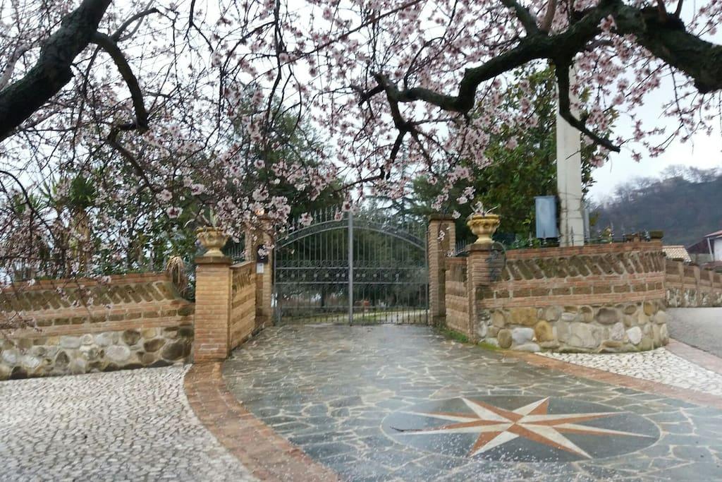 l'ingresso della villa con il mandorlo fiorito