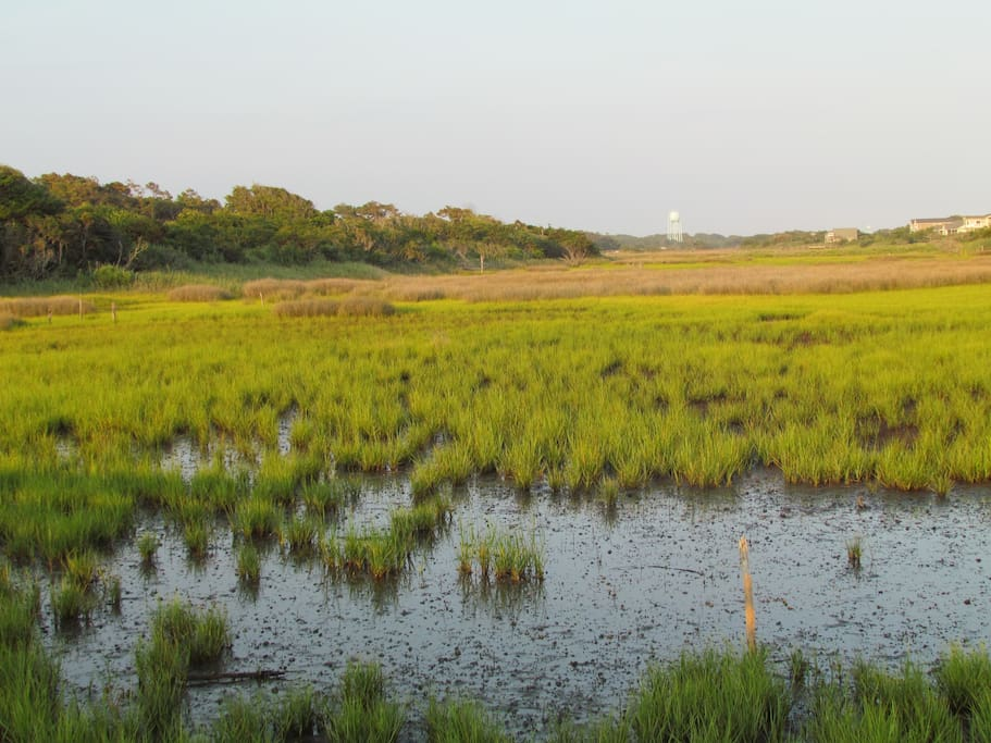 Marsh on the way to beach