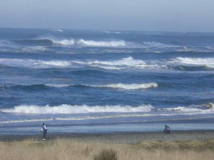 Westport Ocean, 4 + dogs, on WA's Cranberry Coast!