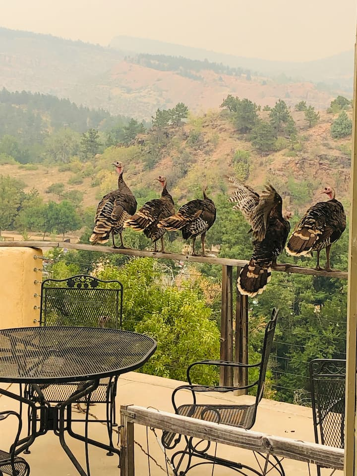 Treehouse Views with Luxury in Lyons
