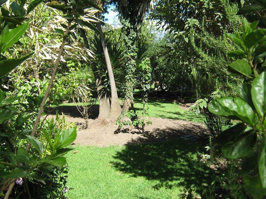 Hermoso y amplio jardin