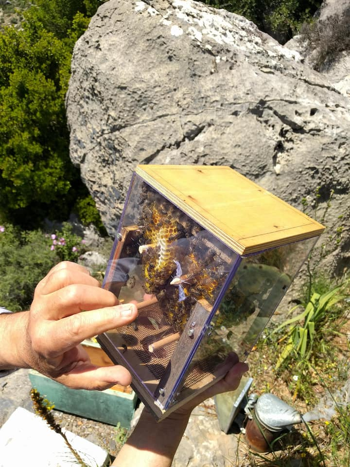 Custom made glass hive for demonstration