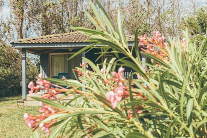 Chalet 6 people with covered pool on Oleron Island