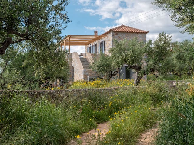 The house is situated in an olive grove. Guests have the whole upper floor to themselves.