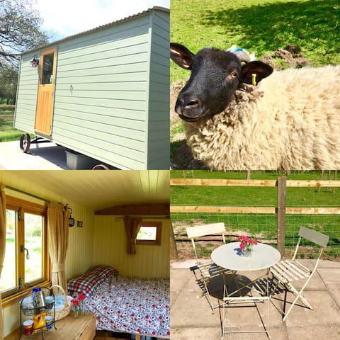 Shepherd Hut - Step Up From Camping - Gloucestershire  - Hutte