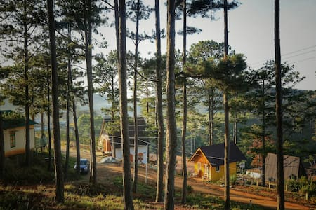 Your eco lodge in the pine trees