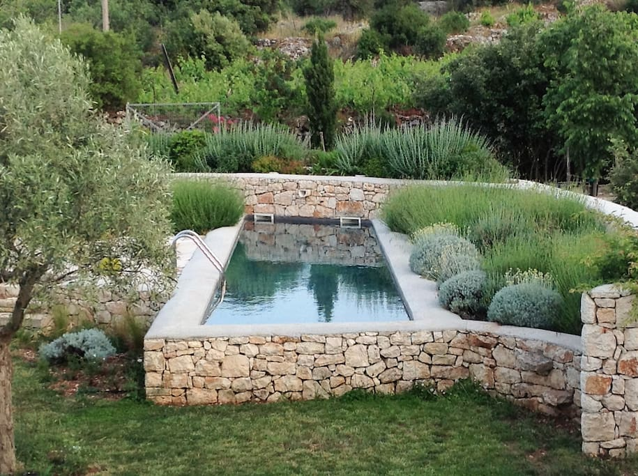 The pool surrounded by our precious lavenders.