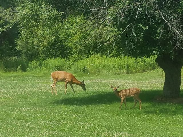 Catch a glimpse of the local wildlife!