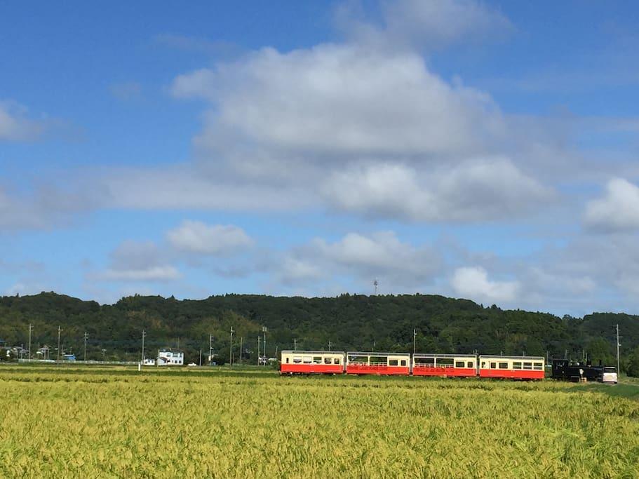 夏:小湊線トロッコ列車