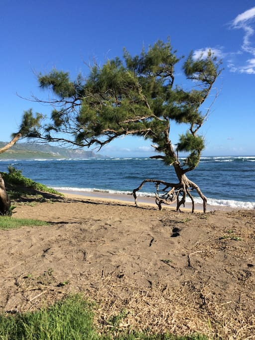 Waiehu Beach Park