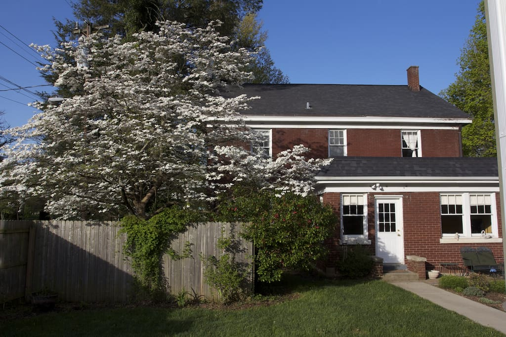 Back of house, Dogwood in bloom