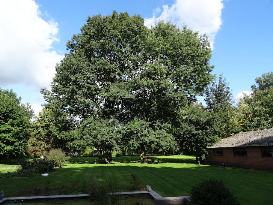 The Two Oaks