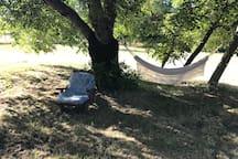 Relax under a walnut tree