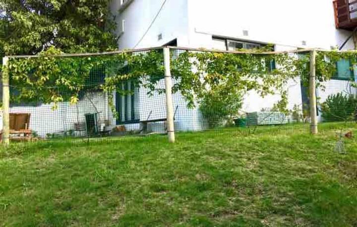 La modern house in the garden