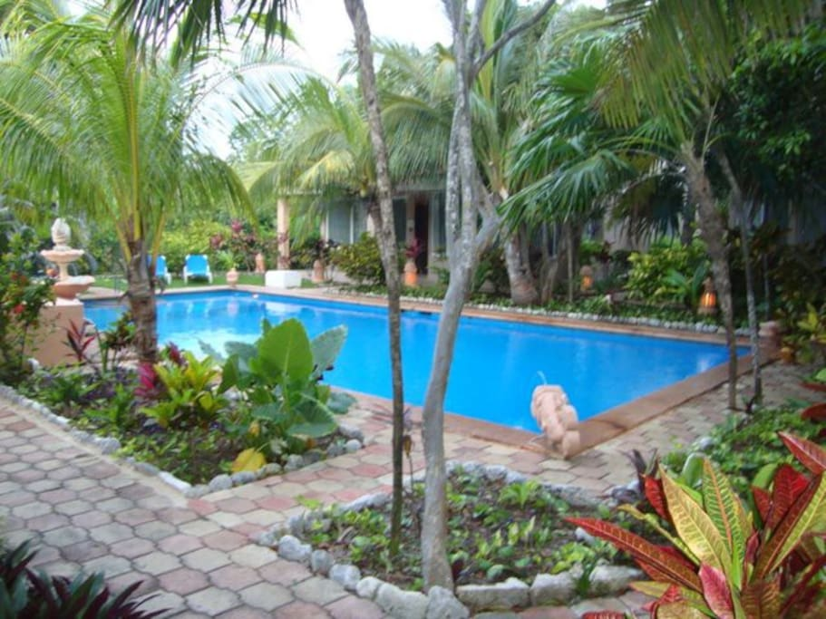 Our pool is in our gardens, a true tropical oasis.