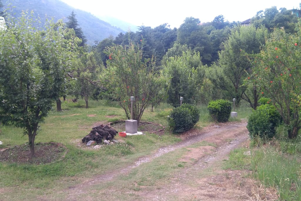 Drive In and view of a fruit Orchard