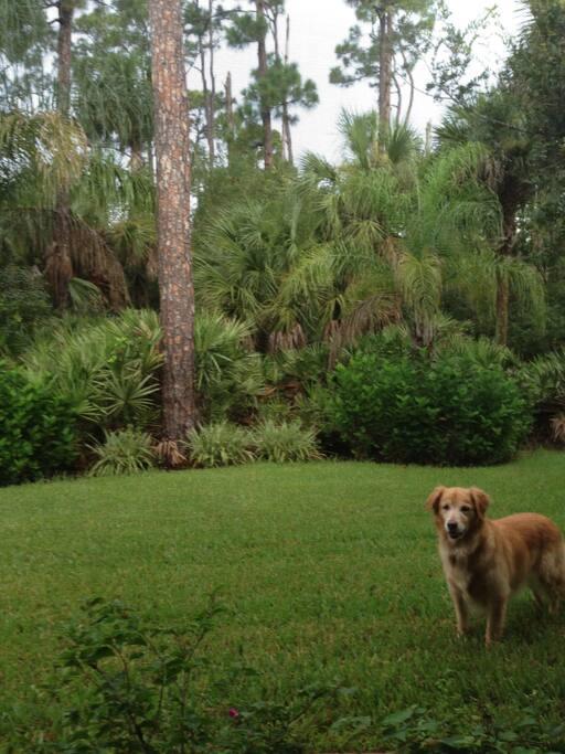 Back yard .... A preserve!