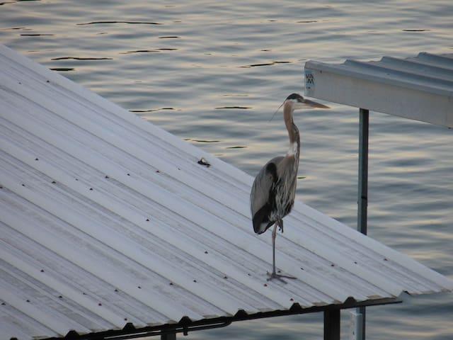 Nothing but Water - Lake Ozark - Complexo de Casas