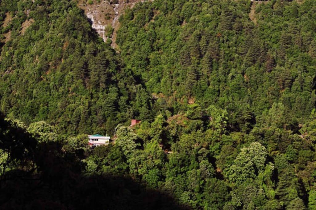 Himalayan house surrounded by forest