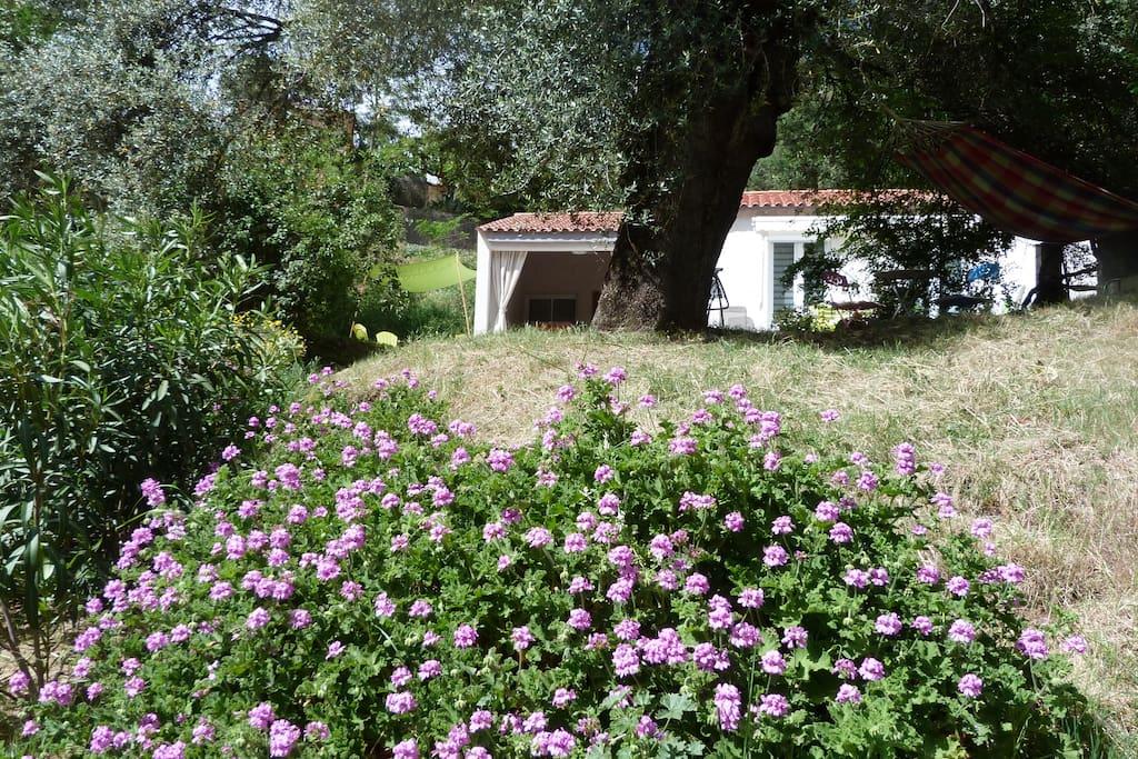 Vue de notre jardin