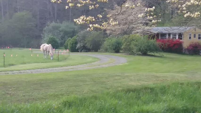 Yellow Cottage Efficiency Apt on 300 acres-Dogwood