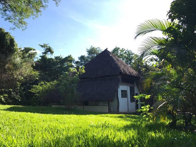 Casa Floresta no Cerrado