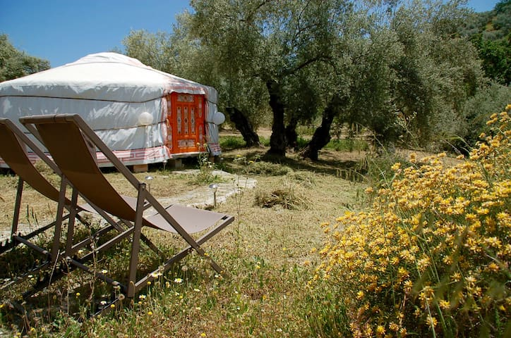 Glamping amidst the Andalusian olivegroves