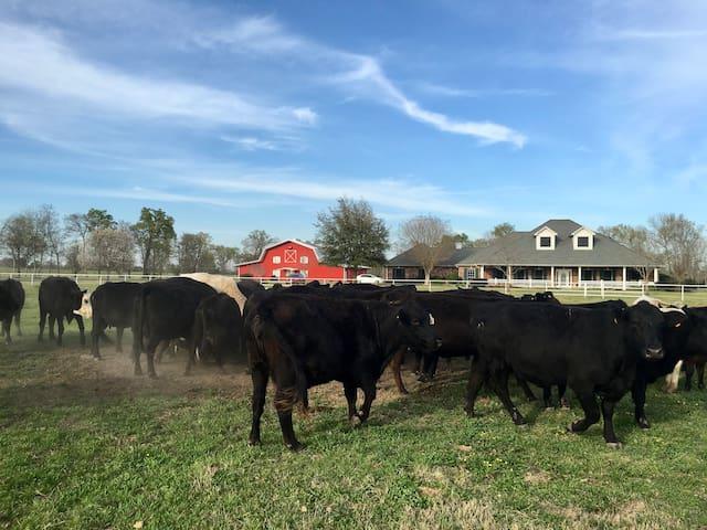 HelloRedBarn - Ranch Life 110 acres