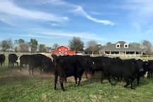 Hello Red Barn