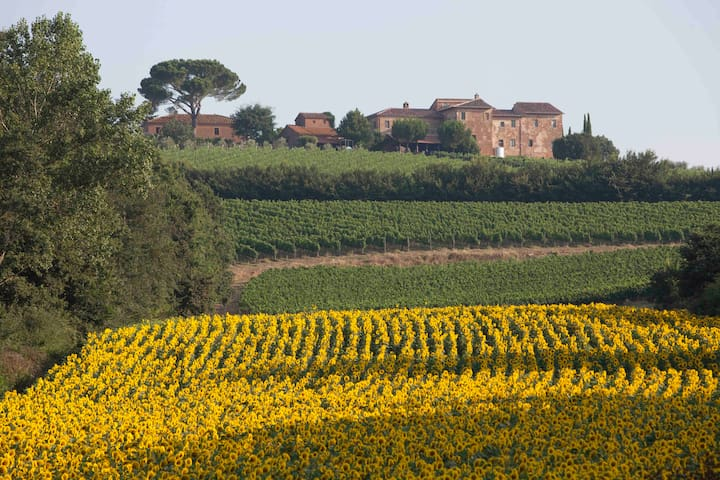 House Winery in the Noble wine of M - Valiano di Montepulciano - 別墅