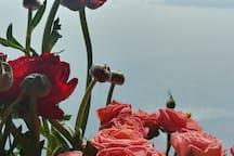rose flowers etc. 장미꽃