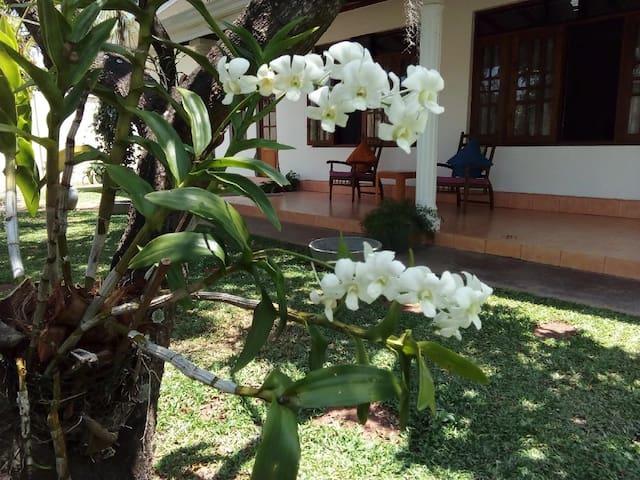 A Hidden Gem in the Tropical Paradise