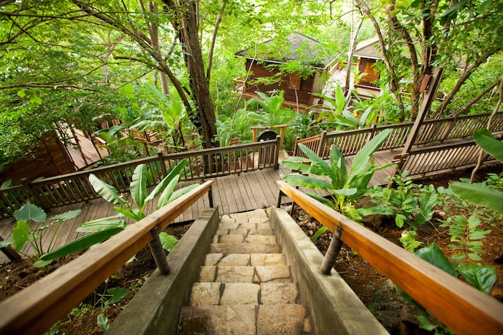 Forest View Treehouse Studio - Tola
