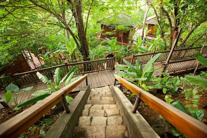 Forest View Treehouse Studio - Tola - Casa na árvore