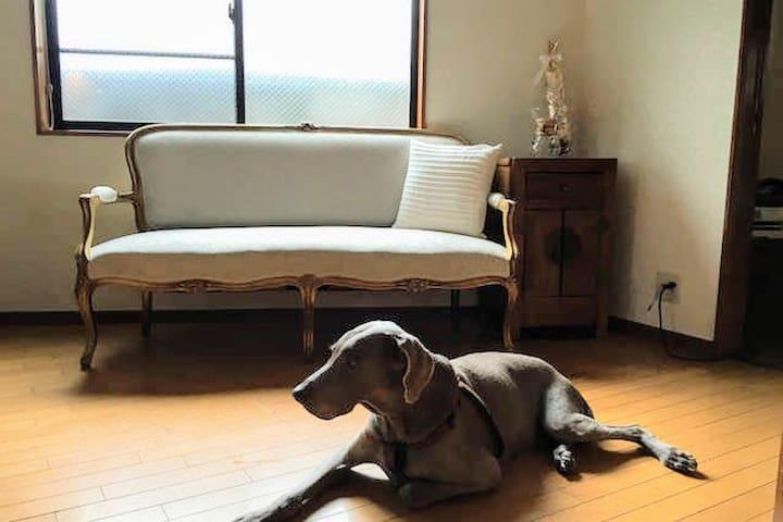 Welcome dog lover!看板犬クリストファーがお出迎え - 世田谷区 - Ev