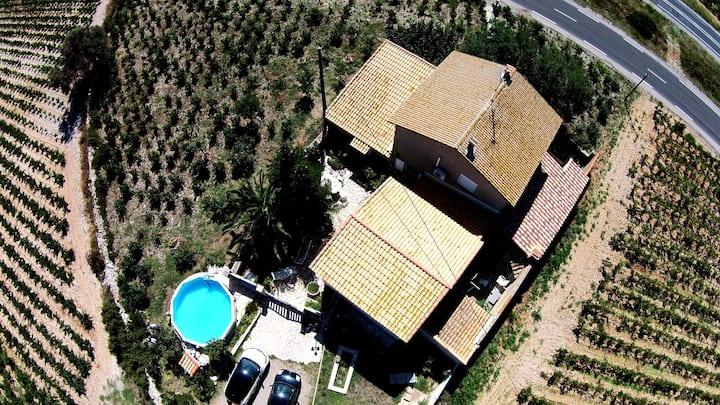 Maison au milieu des vignes