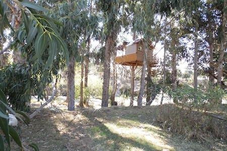 Beautiful Tree House