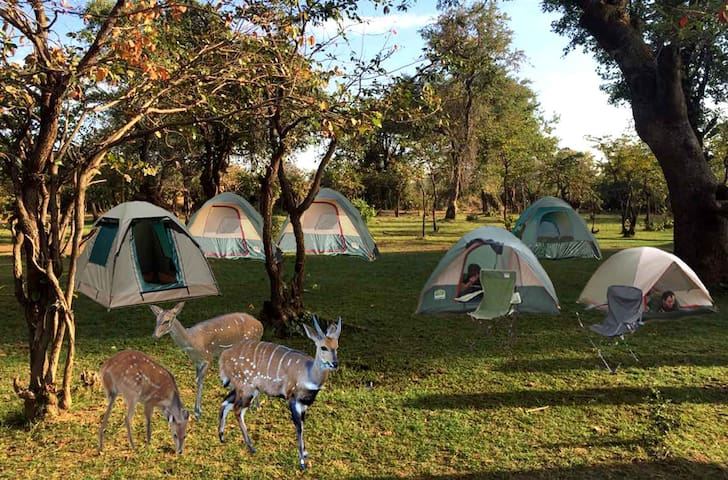 Budget Accommodation at Luangwa Safaris