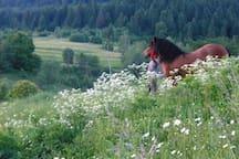 A summer walk around Kukavica