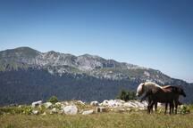 Randonnée dans les massifs à proximité