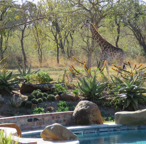 Dombeya Game Reserve- Beautiful Shonalanga Lodge