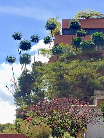 PB Tropical -  Campo Alegre - Caracas