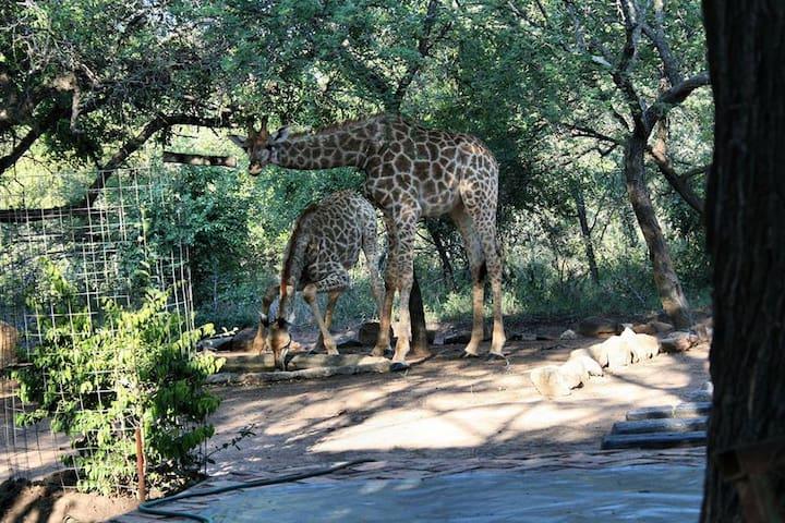 Bushbaby Eden - Marloth Park - House