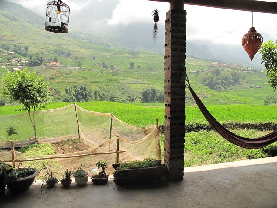 Our terrace with rice fields's view